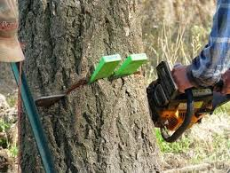 Experienced Tree Felling Johannesburg